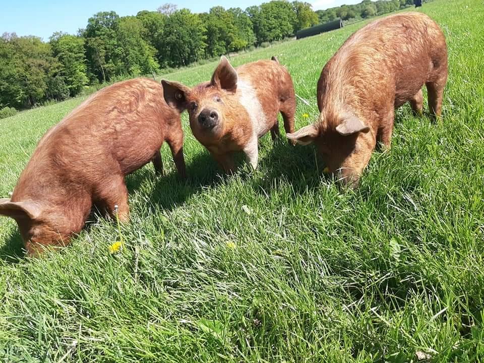 Verse aanvulling van het varkensvlees